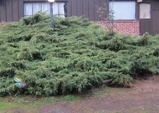 Pre Ejecución Hipotecaria en Lakewood 98498 SHERWOOD FOREST ST SW - Identificador: 1291179474
